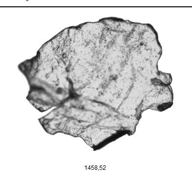 morphologi-partikel-Chitosan